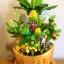 C014-สวนต้นไม้มงคล ส้ม มะยม กล้วย ขนุน 3-12 นิ้ว thumbnail 3