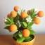 S006-ต้นส้มสูง 6 นิ้ว จำนวน 9 ลูก thumbnail 3