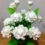 J008-ดอกมะลิ thumbnail 2