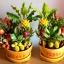 C024-สวนต้นไม้มงคล ทับทิม มะยม ส้ม กล้วย ขนุน_ไซร์ 3-6 นิ้ว thumbnail 3