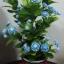 J005-ต้นดอกมะลิ ความสูงรวมกระถาง 18 นิ้ว thumbnail 2