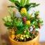 C014-สวนต้นไม้มงคล ส้ม มะยม กล้วย ขนุน 3-12 นิ้ว thumbnail 1