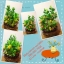 C009-สวนต้นไม้มงคล มะยม ส้ม ขนุน กล้วย_ไซร์ 12-16 นิ้ว thumbnail 11