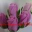 ดอกกุหลาบหลากสีสัน thumbnail 9