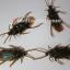 แมลงสาบปลอม 6 ตัว thumbnail 2