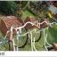 จักรยานแม่บ้าน สไตล์วินเทจ Winn DESIRE วงล้อ 26 นิ้ว พร้อมตะกร้า thumbnail 10