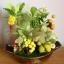 C008-สวนต้นไม้มงคล มะยม ส้ม ขนุน กล้วย_ไซร์ 4-6 นิ้ว thumbnail 2
