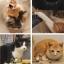 พวงกุญแจน้องแมวสุดน่ารัก thumbnail 3