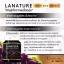 เกรปซีด ของแท้ Lanature Grape Seed Extract สารสกัดจากเมล็ดองุ่น thumbnail 10