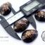 ขายเปลือกหอยเบี้ย หอยเบี้ยแก้ ขนาด 1.4 นิ้ว Monetaria caputserpentis thumbnail 1
