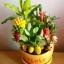 C022-สวนต้นไม้มงคล ทับทิม มะยม ส้ม กล้วย ขนุน_ไซร์ 3-6 นิ้ว thumbnail 1