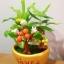 C004-สวนต้นไม้มงคล ไซร์ 3 นิ้ว กล้วย มะยม ส้ม thumbnail 6