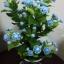 J005-ต้นดอกมะลิ ความสูงรวมกระถาง 18 นิ้ว thumbnail 3