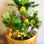 C014-สวนต้นไม้มงคล ส้ม มะยม กล้วย ขนุน 3-12 นิ้ว thumbnail 8