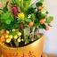 C014-สวนต้นไม้มงคล ส้ม มะยม กล้วย ขนุน 3-12 นิ้ว thumbnail 7