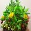 C009-สวนต้นไม้มงคล มะยม ส้ม ขนุน กล้วย_ไซร์ 12-16 นิ้ว thumbnail 6