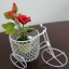001-01 Red rose by mollybloom thumbnail 5