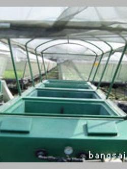 ขั้นตอนการปลูกพืชในระบบแอโรโพนิกส์