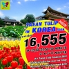 TT TAEANTULIPKOR5D_LJ ทัวร์ เกาหลี TAEAN TULIP IN KOREA 5 วัน 3 คืน บิน LJ