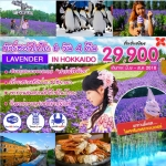 ST LAVENDERHOK6DXJ ทัวร์ ญี่ปุ่น LAVENDER IN HOKKAIDO 6 วัน 4 คืน บิน XJ
