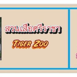 """สวนเสือศรีราชา """"TIGER ZOO"""""""