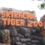 """สวนเสือศรีราชา """"TIGER ZOO"""" thumbnail 2"""