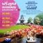 DDT EK010B ทัวร์ ฝรั่งเศส เบลเยียม เนเธอร์แลนด์ TULIP FESTIVAL 2018 7 วัน บิน EK thumbnail 1