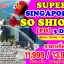SPH SOSHIOK3DFD ทัวร์ สิงคโปร์ SUPERB SINGAPORE SO SHIOK 3 วัน 2 คืน บิน FD thumbnail 1