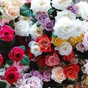 ความหมายของจำนวนดอกกุหลาบ และสี | Floraison Flowers™