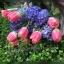ช่อดอกไม้ ทิวลิป ไฮยาซิน (M) thumbnail 2