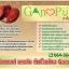 Gano Pure เห็ดหลินจือแดง ซ่อมเซลล์ ชลอวัย ต้านโรค thumbnail 2