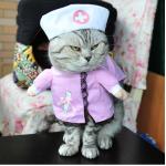ชุดพยาบาล L