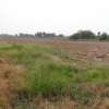 ขายที่ดิน 46 ไร่ ลาดหลุมแก้ว ปทุมธานี