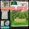 Organic_set A