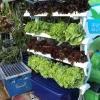 ชุดปลูกผักไฮโดรโปนิกส์ แบบล้อเลือนแนวตั้ง ขนาด 1m. จำนวน 4 รางปลูก