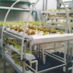 ชุดปลูกผักไฮโดรโปนิกส์ แบบตั้งโต๊ะ ขนาด 1 m 4 รางปลูก+2 รางอนุบาล