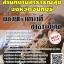 แนวข้อสอบ ผู้ช่วยเจ้าหน้าที่สาธารณสุข สำนักงานสาธารณสุขจังหวัดจันทบุรี thumbnail 1