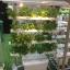 ชุดปลูกผักไฮโดรโปนิกส์ แบบล้อเลือนแนวตั้ง ขนาด 1m. จำนวน 4 รางปลูก thumbnail 5