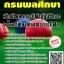 สรุปแนวข้อสอบ(พร้อมเฉลย) นักพัฒนาการกีฬาปฏิบัติการ (ด้านวิทยาศาสตร์การกีฬา) กรมพลศึกษา thumbnail 1