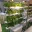 ชุดปลูกผักไฮโดรโปนิกส์ แบบล้อเลือนแนวตั้ง ขนาด 1m. จำนวน 4 รางปลูก thumbnail 2