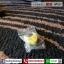 กีตาร์โปร่ง Kazuki kny40cn thumbnail 10