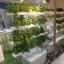 ชุดปลูกผักไฮโดรโปนิกส์ แบบล้อเลือนแนวตั้ง ขนาด 1m. จำนวน 4 รางปลูก thumbnail 4