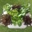 ชุดปลูกผักไฮโดรโปนิส์ แบบ 45 cm. 3 รางปลูก thumbnail 1