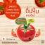 "Smooto Tomato Gluta Aura Sleeping Mask สมูทโตะ โทเมโท กลูต้า ออร่า สลิปปิ้งมาส์ค""ออร่า""หน้าใส ข้ามคืน thumbnail 4"