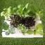 ชุดปลูกผักไฮโดรโปนิส์ แบบ 45 cm. 3 รางปลูก thumbnail 2