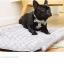 บ้านสุนัขและแมว แปลงเป็นฟูกที่นอนได้ thumbnail 2
